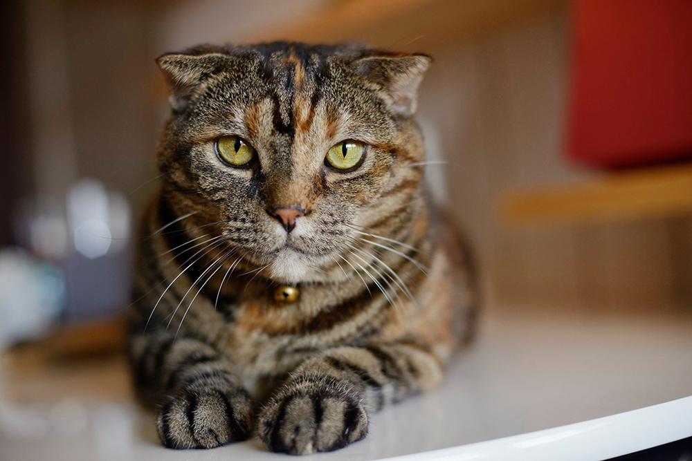 愛猫もくつろげるキャットウォークがお気に入り