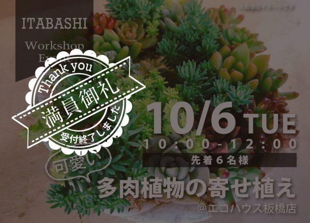 多肉植物の寄せ植え@板橋店